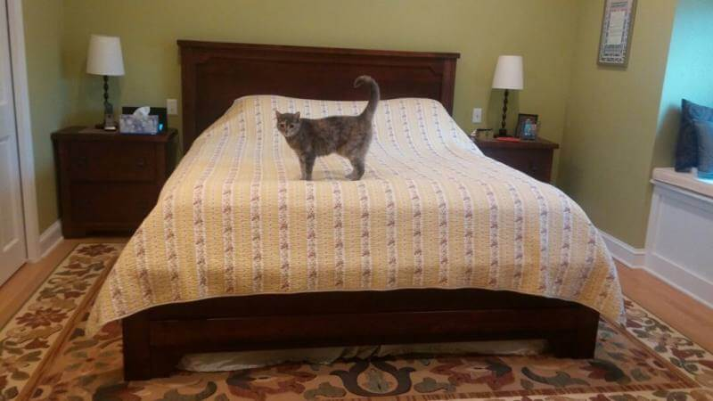 Hero image for blog post showing a made, clean bed with a cat on it